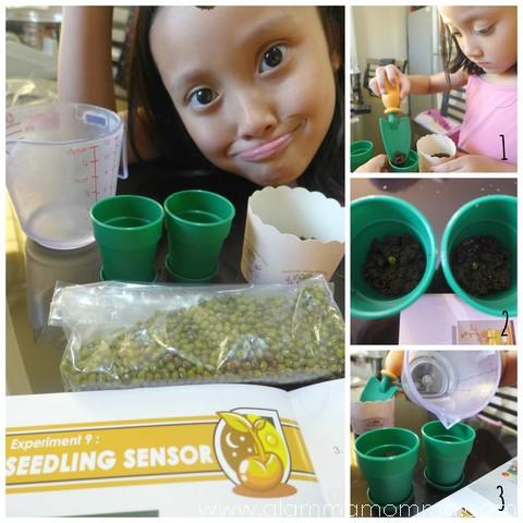 seedling sensor collage
